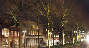 Den Bosch - trees at night 2