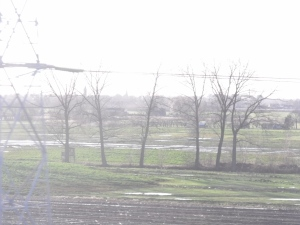 train trees