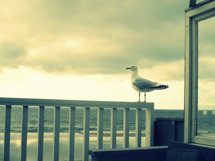seagull Texel