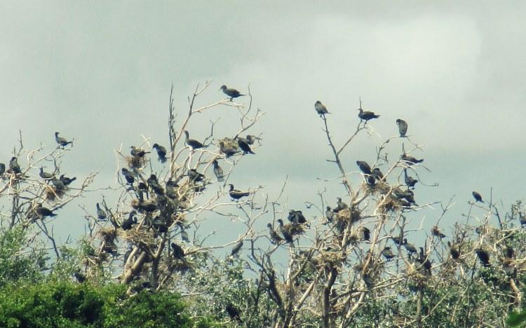 birds near Castricum