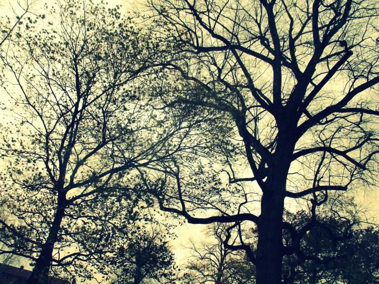 november-trees