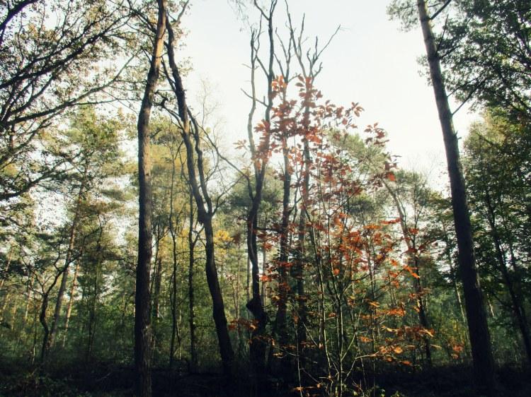 woods by Nijmegen