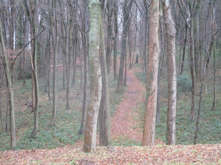 Vaals woods