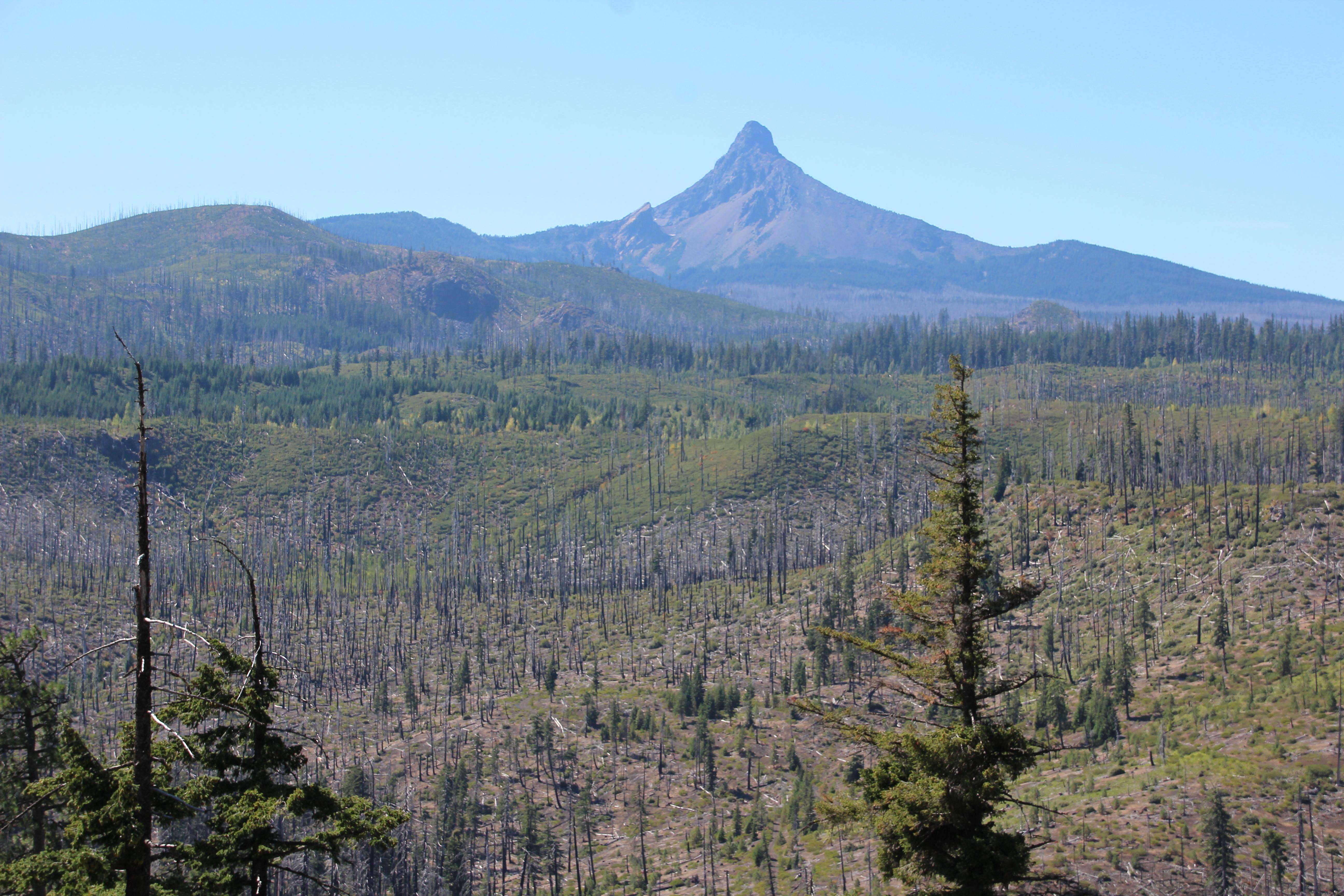 blue scorched Oregon