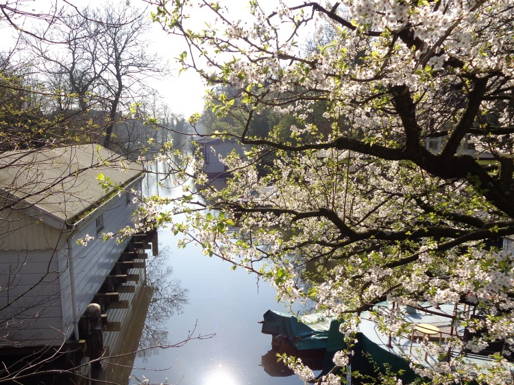 houseboats and blossoms